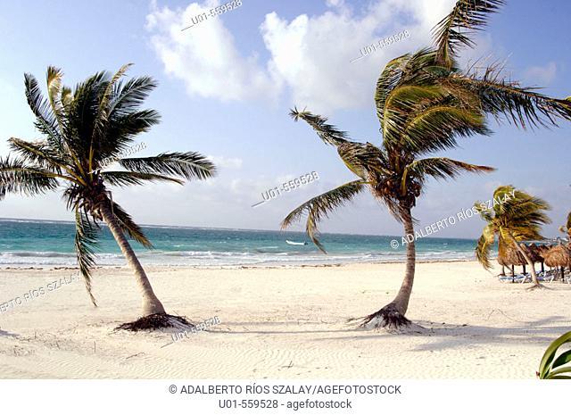 Beach, Caribbean, Mexico