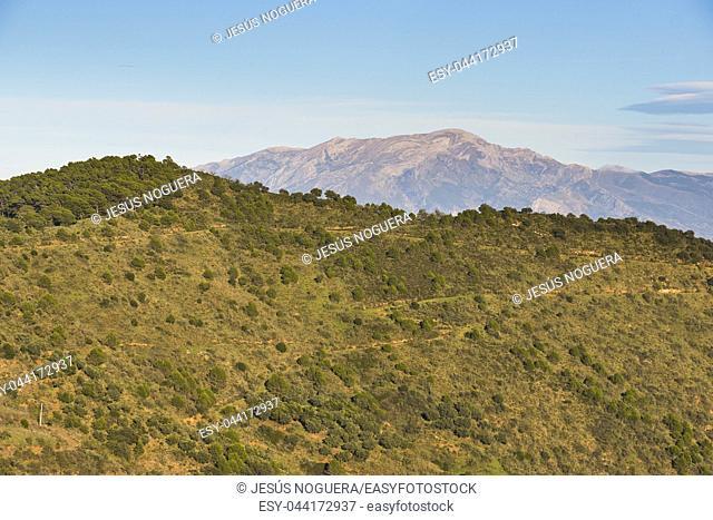 Axarquia, mounts of Malaga, Andalusia. Spain