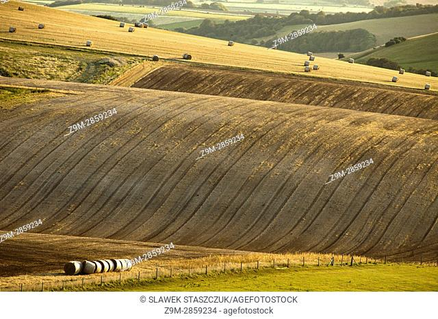 Harvest in South Downs National Park, East Sussex, England