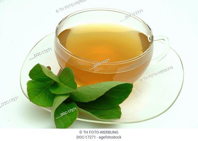 Medicinal plant - Backbean - Buckbean - Marsh trefoil - Bogbean- tea - teacup- Pianta medicinale - Trifoglio fibrino - te