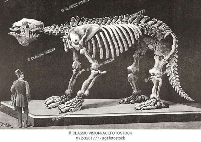 Megatherium americanum, Natural Sciences Museum, Madrid, seen here in the late 19th century. The first Megatherium discovered in Argentina in 1788 was the first...