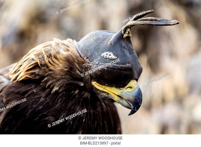 Close up of eagle wearing mask