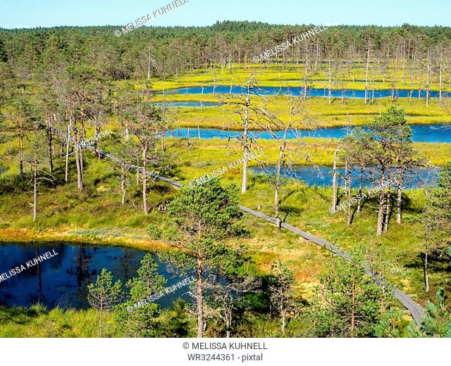 Viru bog, Lahemaa National Park, Estonia, Baltics, Europe