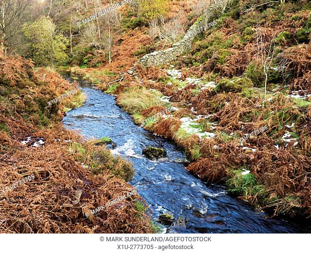Fosse Gill flows down from Nought Moor into Skrikes Wood near Pateley Bridge North Yorkshire England