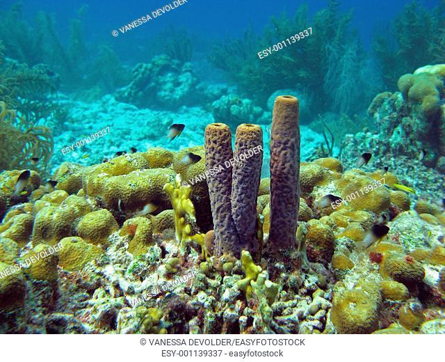Underwater landscape with sponges in Bonaire, Dutch Antilles, Caribbean sea