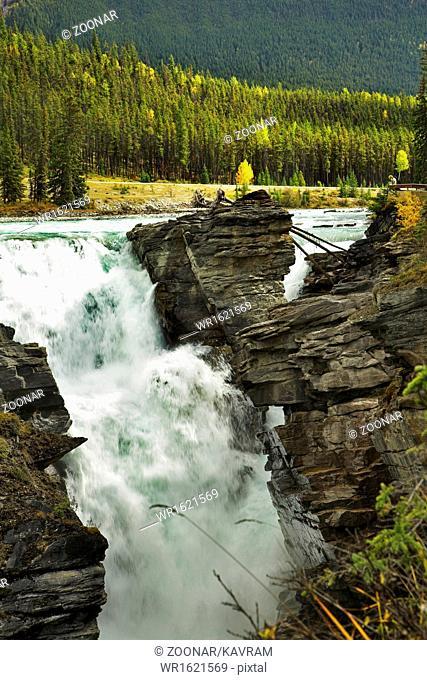 Fur-trees above roaring falls