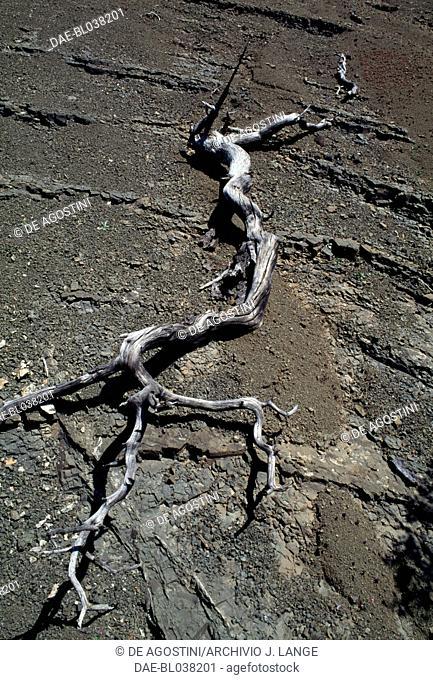 Dried tree, Rhodes island, Greece