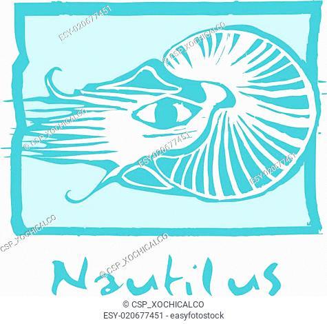 Nautilus in Blue