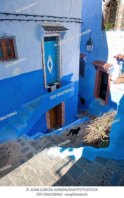 Pets on Street in medina of blue town Chefchaouen, Morocco