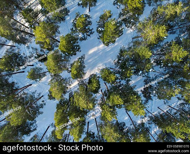 Aerial view of winter siberian forest