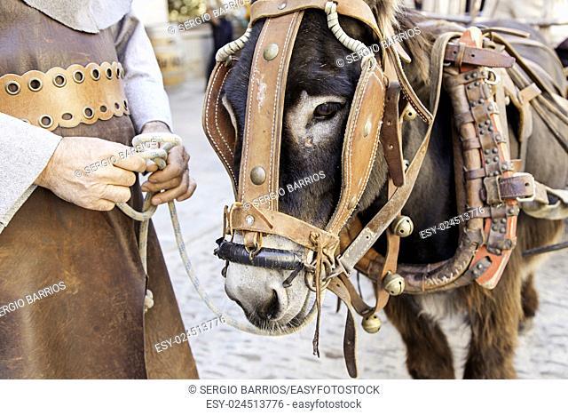 Donkey head, detail mammal animal farm. in Spain