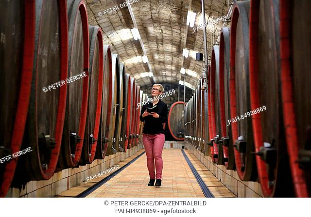 29-year-old cellar master Kathleen Romberg checking the wine barrels from 2015 at the representative wooden barrel cellar of the winemaker association...
