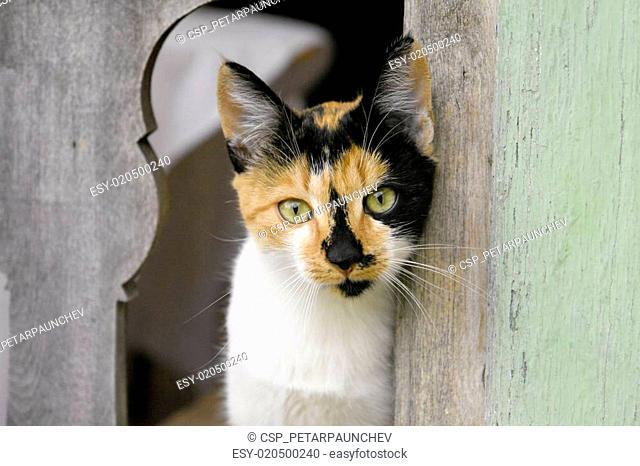 Calico Cat Staring Through Fence