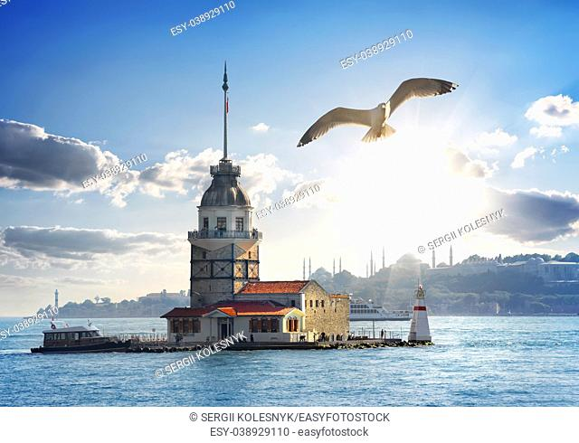 Seagull flying near Maiden's Tower in Istanbul at day, Turkey