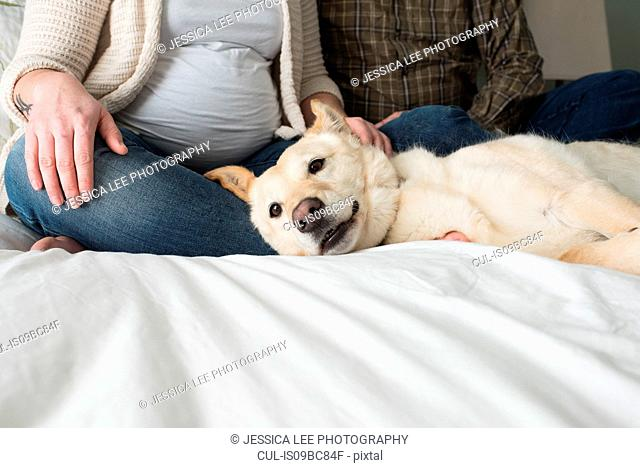Pregnant woman sitting with partner on bed, dog lying on bed beside them, low section