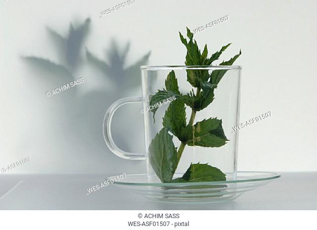 Peppermint leaves in a glass
