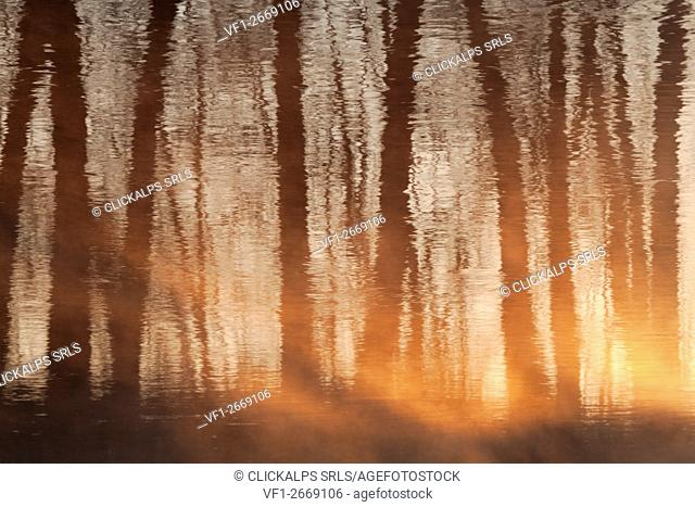 Torre Pallavicina, Oglio north park, Bergamo, Italy. Trunks of trees reflected into the Oglio river at sunrise
