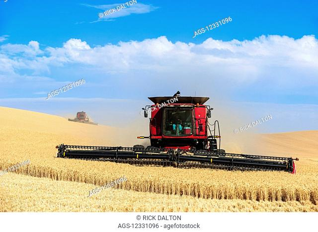 A Combine Harvests Grain In The Palouse Region Of Eastern Washington; Washington, United States Of America