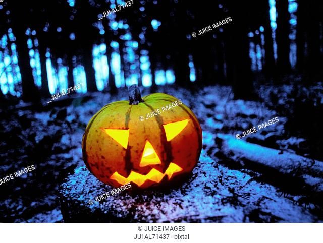 High angle view of jack-o-lanterns in a forest