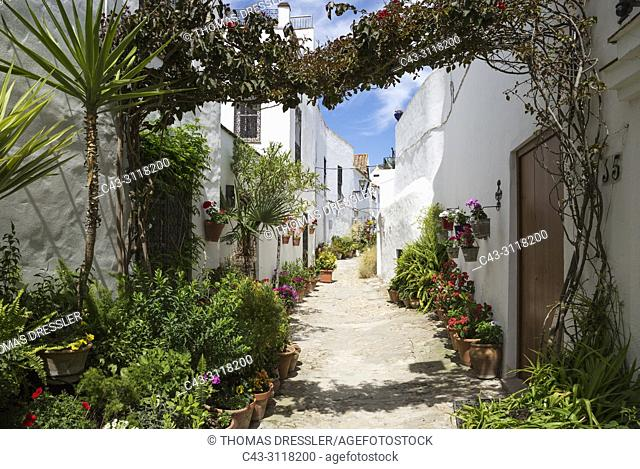 Beautiful alleyway with flowerpots and brillianty whitewashed houses in the hilltop town of Vejer de la Frontera. Cadiz province, Andalusia, Spain