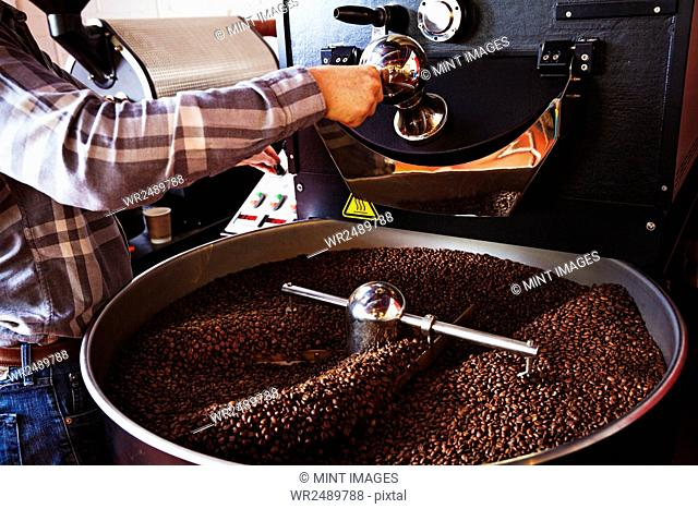 Specialist coffee shop. Coffee beans roasting in a drum, being stirred with a metal paddle