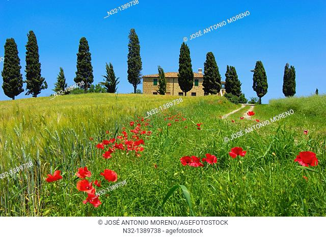 Val d'Orcia, Orcia Valley, Farm with cypress trees, Fields and Farmhouses, Tuscany Landscape, UNESCO world heritage site, Pienza, Siena Province, Tuscany, Italy