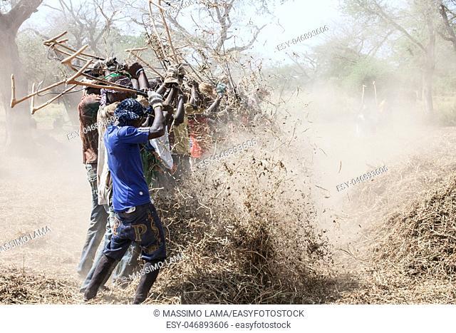 Peanut pickers in country, Seine de Saloium, Senegal, November 2012