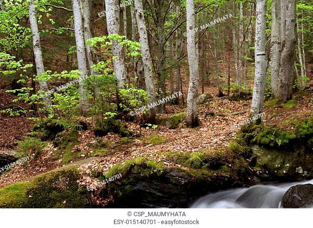 Mountian River