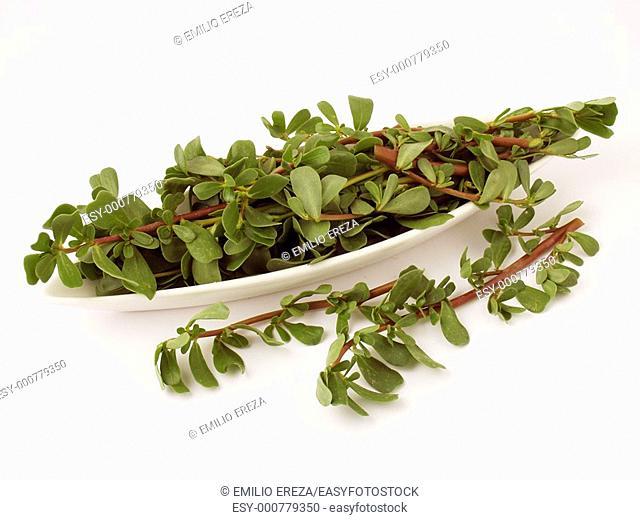 Purslane leaves