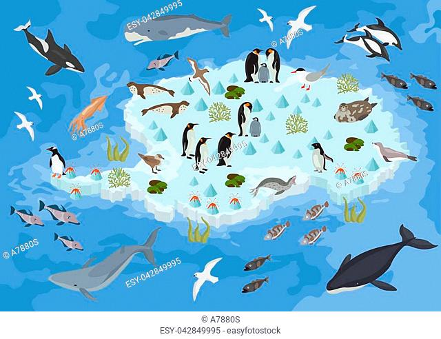 Isometric 3d Antarctica flora and fauna map elements. Animals, birds and sea life. Build your own geography infographics collection
