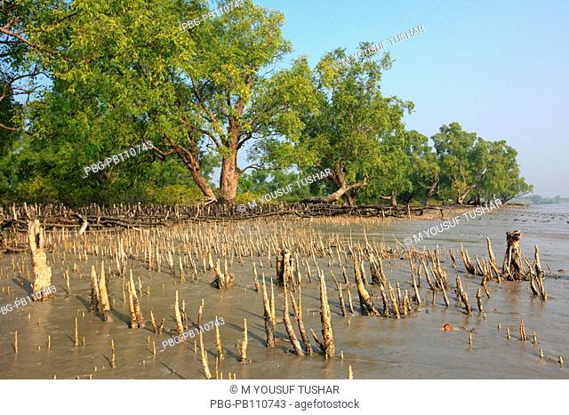 The Sundarbans, a UNESCO World Heritage Site and a wildlife sanctuary The largest littoral mangrove forest in the world, it covers an area of 38, 500 sq km