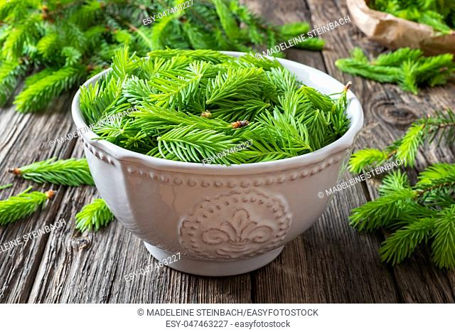 Young spruce tips in a bowl - ingredient for preparation of a homemade herbal syrup