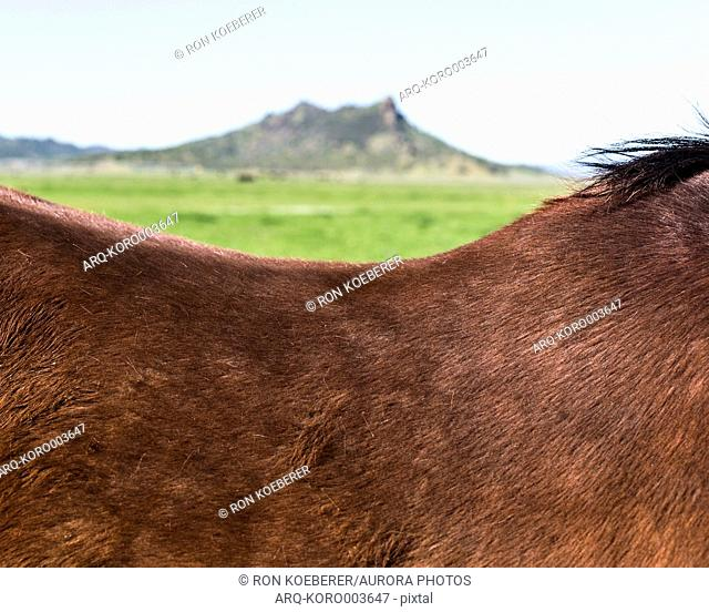 Close up of horses back and mountain in background, Williams, California, USA