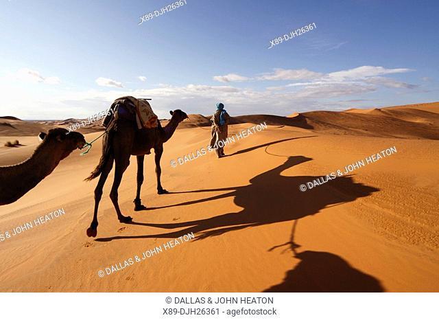 Africa, North Africa, Morocco, Sahara Desert, Merzouga, Erg Chebbi, Berber Tribesman Leading Camels