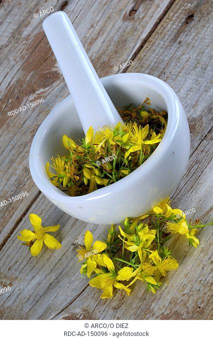 Perforate St John's Wort mortar medicinal herbs Hypericum perforatum
