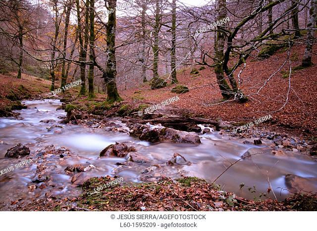 Autumn in Irati, Navarre, Spain