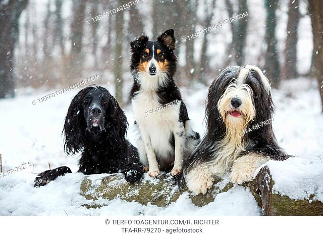 dogs in snow flurries