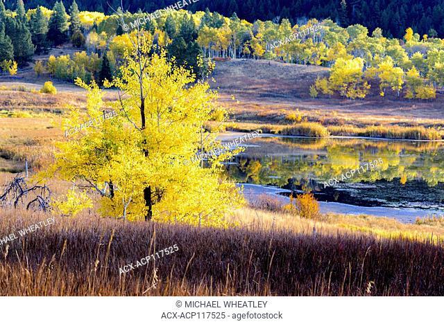 Fall colour, Kidd Lake, Aspen Grove, British Columbia, Canada