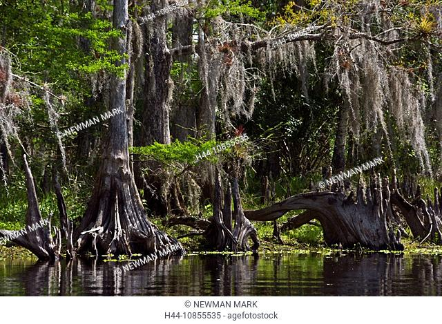 10855535, USA, North America, Florida, Nature, Riv