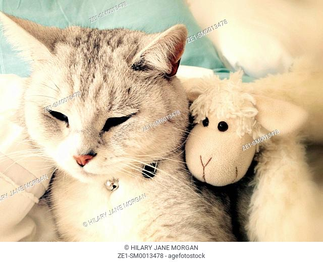 Cat and toy sheep