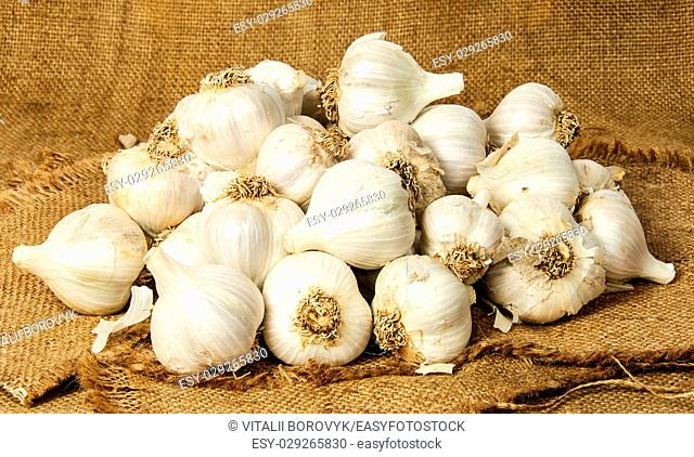 Big pile of garlic poured out into the sackcloth