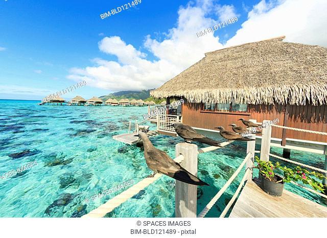 Birds perched on bungalow railing, Bora Bora, French Polynesia