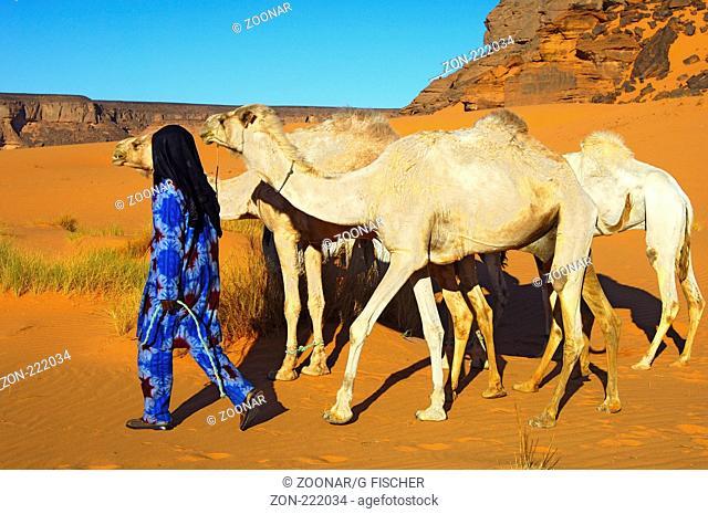 Tuareg Nomade mit weissen Mehari Reitdromedaren, Akakus Gebirge, Libyen / Tuareg nomad with white Mehari riding dromedaries, Acacus Mountains, Libya