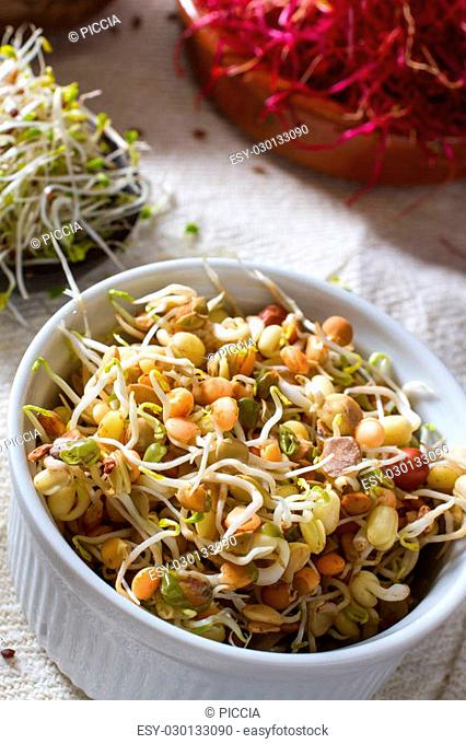 Colourful and healthy crunchy sprouts: bean sprouts with alfalfa and red beet sprouts in the background