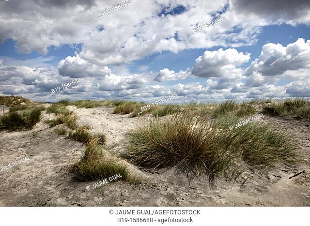 Dunes in East Head, West Wittering beach, Chichester harbour, England, United Kingdom, Europe
