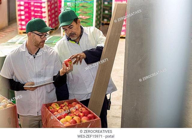 Workers checking apple stock
