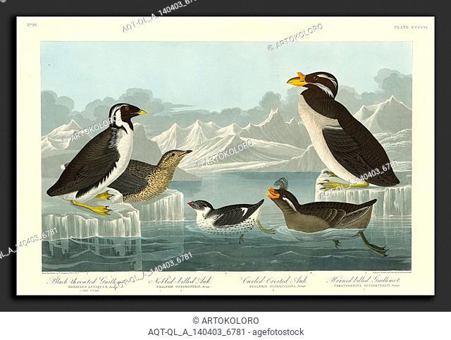 Robert Havell after John James Audubon (American, 1793 - 1878), Black-throated Guillemot, Nobbed-billed Auk, Curled-Crested Auk and Horned-billed Guillemot