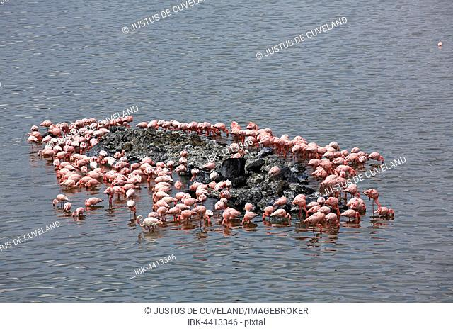 Lesser flamingos (Phoeniconaias minor) and flamingos (Phoenicopterus roseus), Big Momella Lake, Arusha National Park, Tanzania