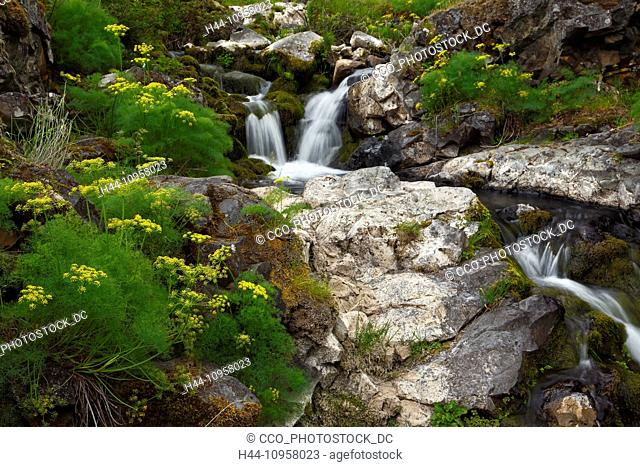 A small cascade and desert parsley in the Columbia Gorge National Scenic Area. Washington. USA. spring