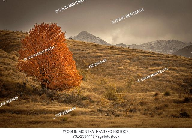Lone tree in autumn colours, storm engulfs Nevis valley, Otago